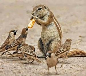 Chipmonk & birds, sharing, John Depp, Badal Kumar