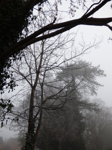 silhouetted trees in fog