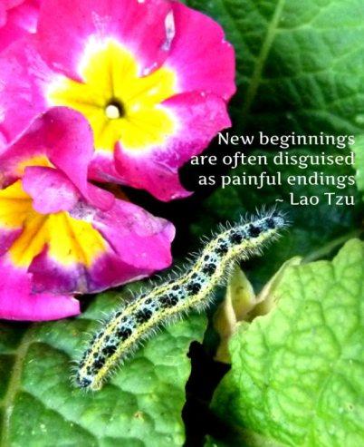 caterpillar (2)