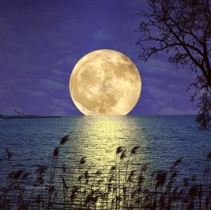 moonlight I