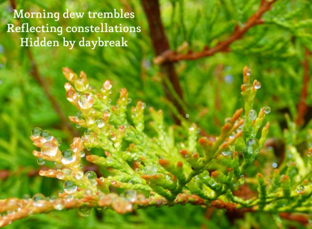 morning dew trembles, reflecting constellations hidden by daybreak