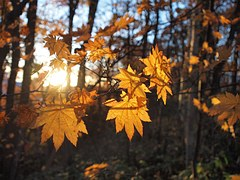 autumnal-leaves-978740__180