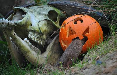 skull_pumpkin