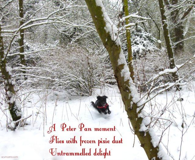 A Peter Pan moment Flies with frozen pixie dust Untrammelled delight