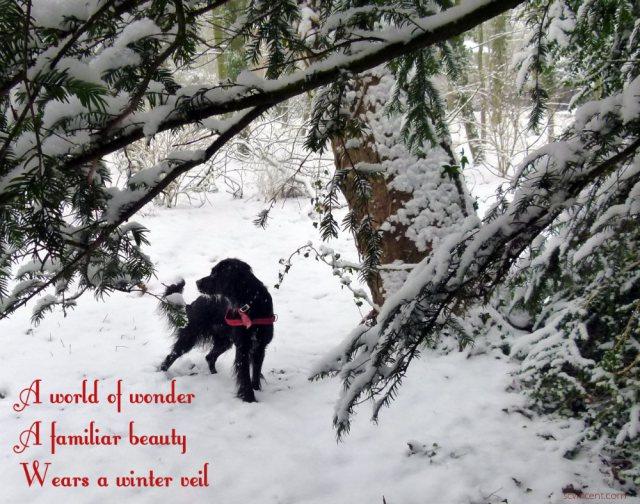 A world of wonder A familiar beauty Wears a winter veil