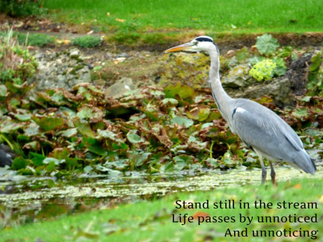 Stand still in the stream Life passes by unnoticed And unnoticing