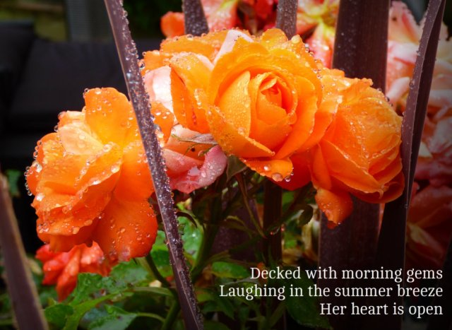 Decked with morning gems Laughing in the summer breeze Her heart is open