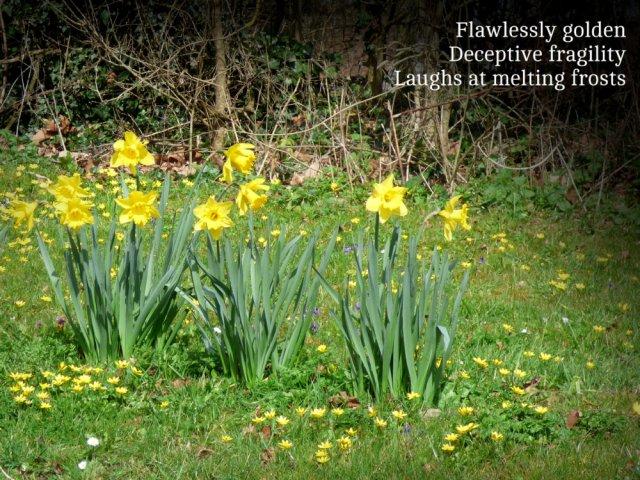 flawlessly golden, deceptive fragility laughs at melting frosts