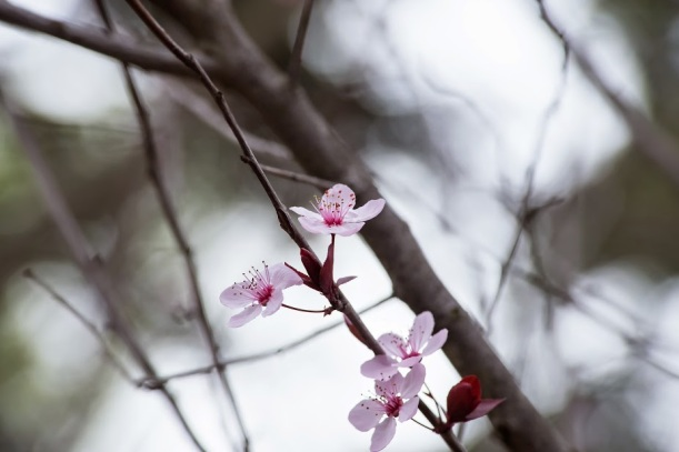 plum (2 of 4)