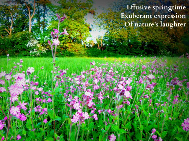 Effusive springtime Exuberant expression Of nature's laughter