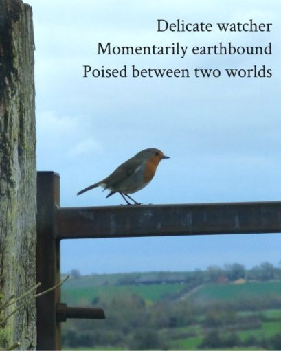 Delicate watcher Momentarily earthbound Poised between two worlds
