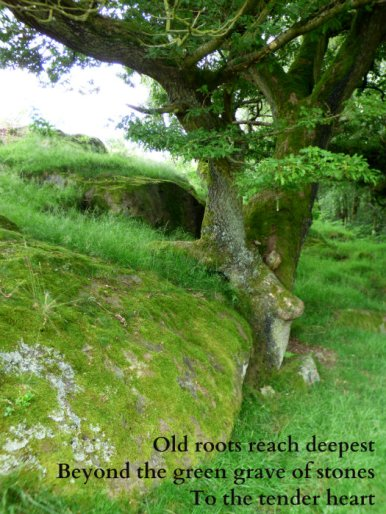 old-roots-reach-deepest-beyond-the-green-grave-of-stones-to-the-tender-heart