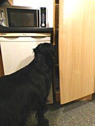 dog-006