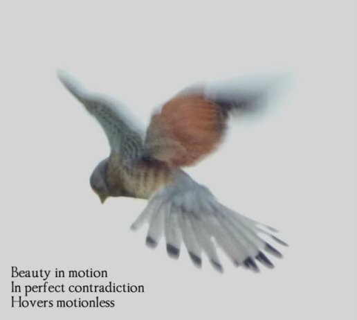 beauty-in-motion-in-perfect-contradiction-hovers-motionless