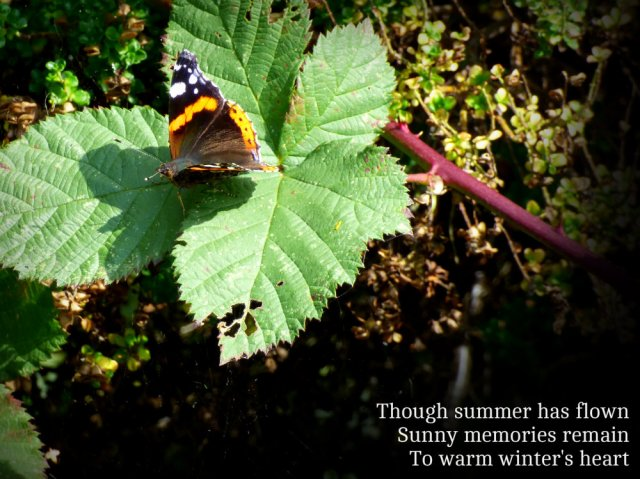 though-summer-has-flown-sunny-memories-remain-to-warm-winters-heart