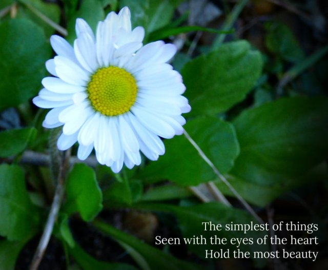 daisy-the-simplest-of-things-seen-with-the-eyes-of-the-heart-hold-the-most-beauty