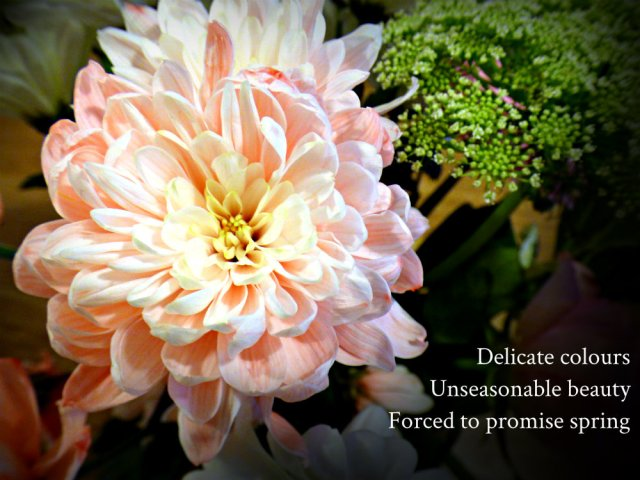 delicate-colours-unseasonable-beauty-forced-to-promise-spring