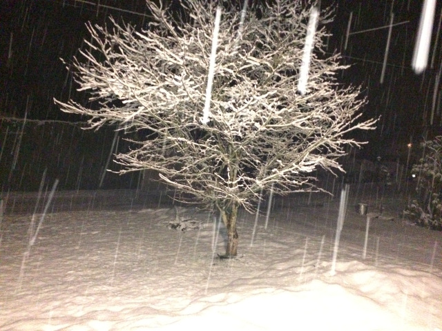 Midnight last night ... Yep ... that'd be more snow! ( shot from the front door, cos there's no way I'm going out there)