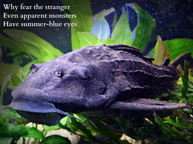 why-fear-the-stranger-even-apparent-monsters-have-summer-blue-eyes