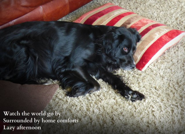 Dog watching the world from a nest of sofa cushions