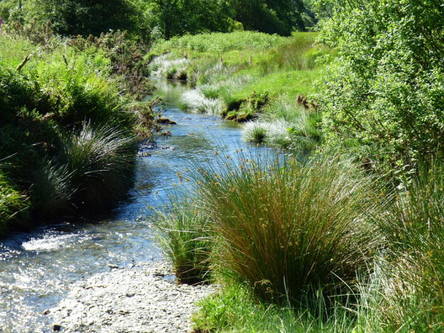 Image of clear stream in sunlight